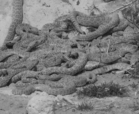 snake pit